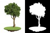 pic of asymmetric  - Isolated Green Tree with Asymmetric Crown on Green Grass with Detail Raster Mask - JPG