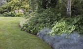 stock photo of fescue  - A shade garden with a gentle border curving past a wide variety of perennial plants including blue fescue and birch as a blooming hosta can be seen in the distance - JPG