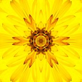 picture of kaleidoscope  - Yellow Mandala Concentric Dahlia Flower Kaleidoscope Center - JPG