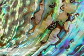 image of mother-of-pearl  - Close up Background of blue green and purple abalone pearl shell - JPG