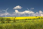 picture of wind-turbine  - rapeseed field and wind turbines in spring