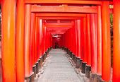 foto of inari  - Tori gates at Fushimi Inari Shrine in Kyoto - JPG
