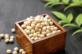 stock photo of soya beans  - close up shot of dried soy beans - JPG