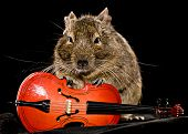 stock photo of cello  - small rodent with little cello full - JPG