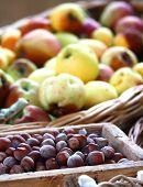 pic of hazelnut tree  - A lot of Hazelnut and apples inside a market  - JPG