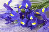 image of purple iris  - Fresh purple iris on the net background - JPG