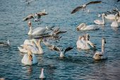 stock photo of water bird  - Birds swans sea gulls birds nature trip - JPG