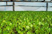 stock photo of greenhouse  - Organic greenhouse - JPG