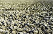 stock photo of plowed field  - Plowed field in springtime - JPG