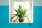stock photo of plant pot  - Potted plant standing on the window backlit - JPG