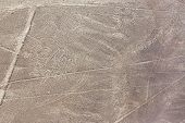 picture of geoglyph  - Nazca Lines octopus geoglyph in Nazca - JPG