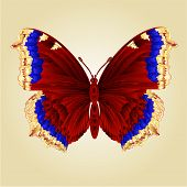 pic of butterfly  - Butterfly Nymphalis antiopa beautiful mountain butterfly vector illustration - JPG