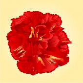 picture of hibiscus flower  - Tropical flower red hibiscus blossom simple flower vector illustration - JPG