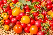 pic of picking tray  - Assorted colorful tomatoes and herbs froma garden - JPG