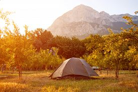 image of pomegranate  - tents in the pomegranate orchard with riped pomegranates - JPG
