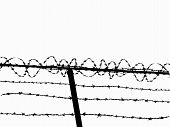 pic of barbed wire fence  - Razor wire fence  - JPG