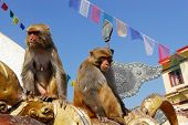 Monkeys at monkey-temple swayambhunath in Kathmandu, Nepal