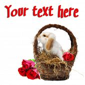 stock photo of get well soon  - Cute baby easter bunny in a basket filled with hay and red roses isolated on white for conceptual post cards for holidays - JPG