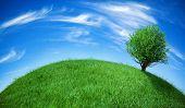 Постер, плакат: Глобус земли с деревом