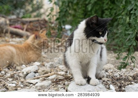 poster of Two Little Cats Are Sitting On The Street. Lovely Cat. Cats Are Sitting On The Street. Red And Gray