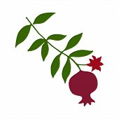 Sketch With Pomegranate On Branch With Green Leaves And Flower Silhouette. Red Pomegranate Fruit Ico poster