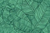 Tropical Leaves. Seamless Texture With Banana Leaf. Hand Drawn Tropic Foliage. Exotic Green Backgrou poster