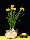 Narcissi Easter Mood. Bright Yellow Daffodils In Sackcloth Pot, Bird Nest With Big Yellow Egg Standi poster
