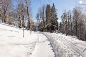 Winter Landscape - Forest Snowy Winter Trees In Cloudy Winter Weather. Winter Nature Tranquil Scene, poster