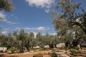 stock photo of gethsemane  - Jerusalem - JPG