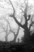 stock photo of walking dead  - Man walking in a dark and mysterious foggy forest - JPG