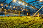 Modern Hydroponic Greenhouse With Complex Climate Control System For Cultivation Of Agricultural And poster