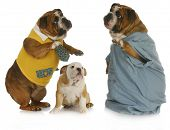 veterinary care - english bulldog parent talking to veterinarian with baby bulldog looking on poster