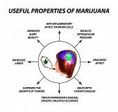 Useful Properties Of Smoking Cannabis. Cannabis Treatment. Cannabinoid, Hemp. Marijuana Leaf And Hum poster