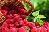 Basket Full Of Freshly Picked Raspberries. Small Basket Of Fresh Raspberries. poster