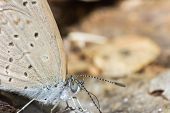 Macro Butterfly In Nature, Macro Insect In Nature, Animal In Wild poster