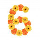 pic of six-petaled  - Yellow and orange daisy - JPG