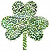 Saint Patricks Day Many Shamrocks poster