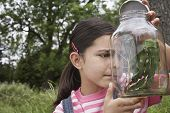 picture of stick-bugs  - Curious little girl examining stick insects in jar outdoors - JPG