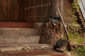 picture of snipe  - hunting birds gun and accessories horizontal outdoors - JPG