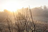 picture of cobweb  - Autumn cobweb covered with dew on the bushes in the fog - JPG