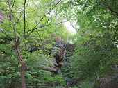 picture of starving  - Spring Time Trees along one of the Box canyons at Starved Rock State Park