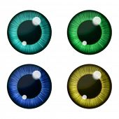 pic of human eye  - Vector eyes collection - JPG