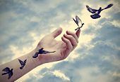 foto of peace  - Bird tattoos come to life - JPG