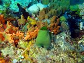 stock photo of squirt  - The surprising underwater world of the Bali basin - JPG