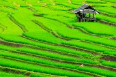 picture of pesticide  - Cottage Terrace rice fields in Mae Chaem District Chiang Mai - JPG
