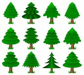 image of conifers  - Isolated set of vector conifers with grass - JPG