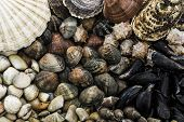 picture of clam  - Shellfish assortment Different shellfish and clams close up - JPG