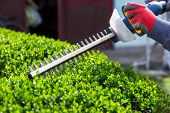 stock photo of electric trimmer  - Cutting a hedge with electrical hedge trimmer - JPG