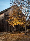 stock photo of burlington  - Autumn landscape in Batsto Village Burlington County NJ - JPG