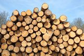 foto of lumber  - Stack of new wooden studs at the lumber yard - JPG